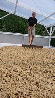 kona coffee, coffee farm, KONA, blue horse kona coffee